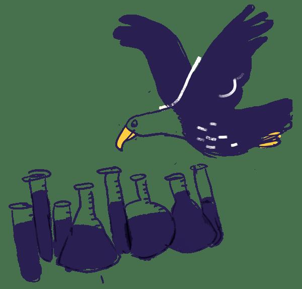 hawk watching test tubes